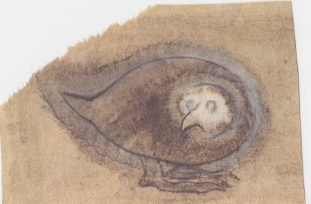 Nervous Pigeon